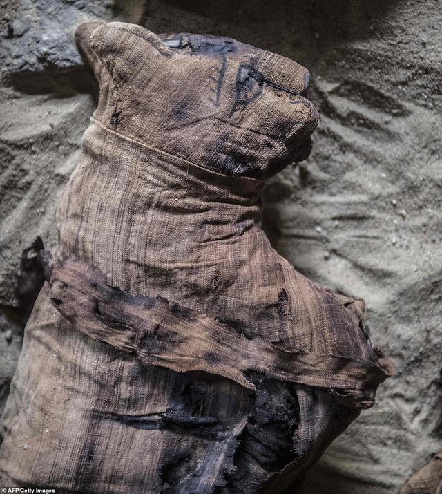新浪科技讯  北京时间11月16日消息,据国外媒体报道,目前,埃及考古学家称,最新发现几十具木乃伊猫,一组罕见的圣甲虫干尸,以及看似未开发的几座第五王朝古墓,计划未来几周内对外开放。