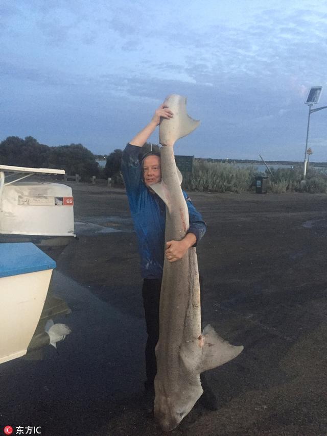 澳大利亚渔民Mathew Orlov出海时捕捞到一条长2.7的哈那鲨,然而收网后,他很快就发现了不对,这只鲨鱼明明已经死亡,但它的圆鼓鼓的肚子却还在不停蠕动。Mathew马上意识到它是怀孕的母鲨,立即进行了剖腹产手术,救出了98只鲨鱼幼崽,将它们放归了大海。