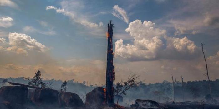 如果地球的樹木都消失了,人類還能生存嗎?