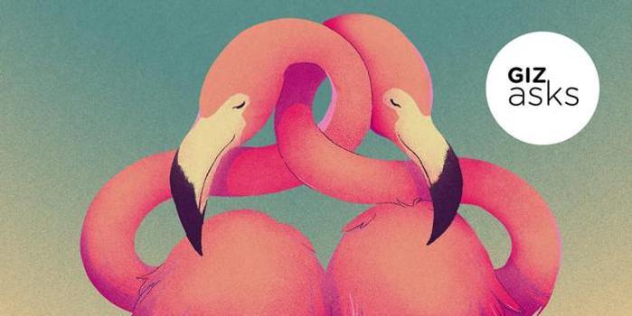 哪種動物最遵守一夫一妻制?