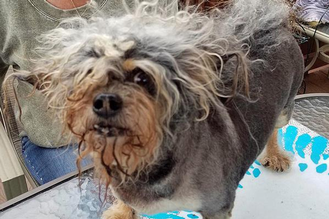 世界最丑狗开赛萌犬丑出天际