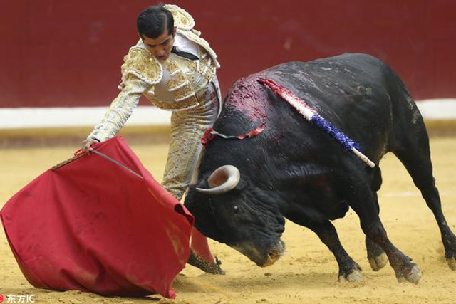 葡萄牙斗牛士活割牛耳