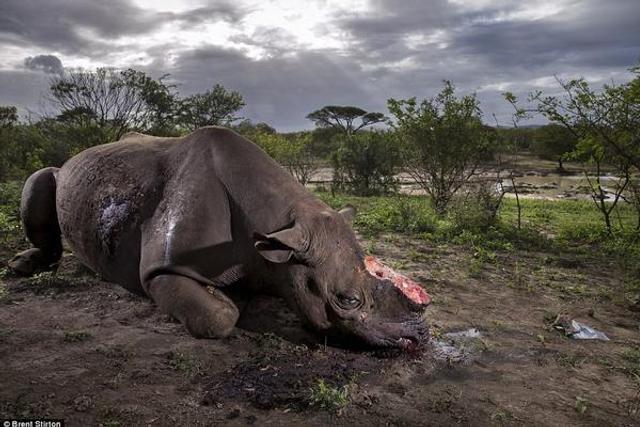 英国年度野生动物摄影师奖公布