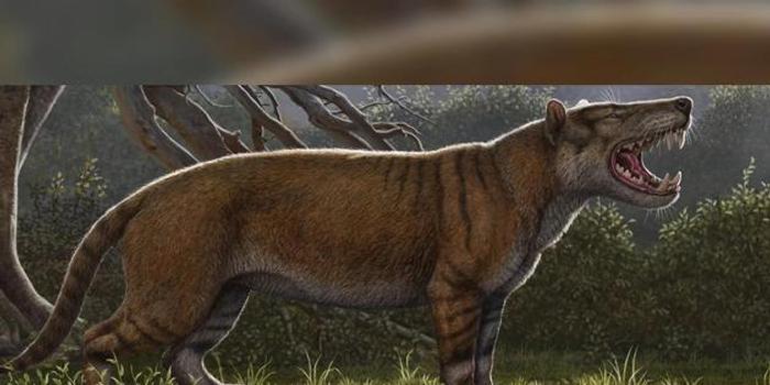 """2200萬年前滅絕怪獸比《指環王》中的""""座狼""""更可怕"""