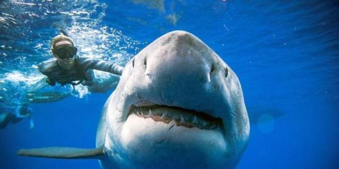近6米大白鯊襲擊皮劃艇留下巨齒 2男子幸運生還