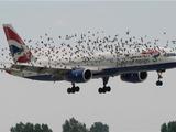 """""""飞机撞鸟""""世界性难题有新突破"""