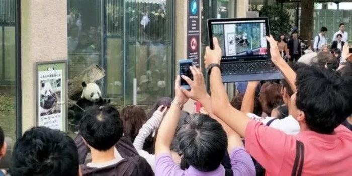 日本人挤爆动物园 只为看这只新生的中国国宝