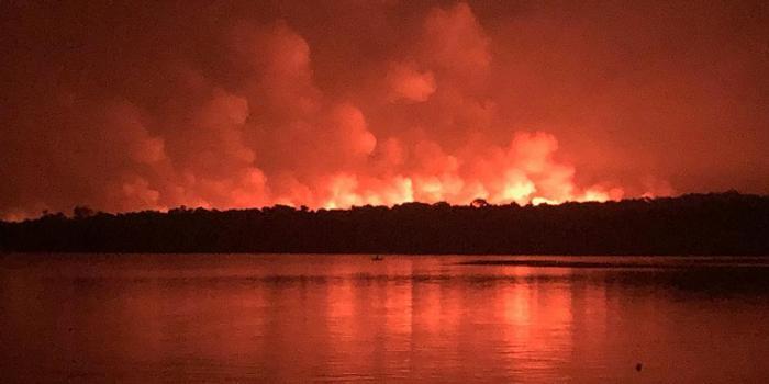 巴西帕拉州森林大火再次失控