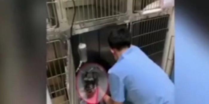 北京朝陽一小區多只寵物狗被毒死 警方介入大發紅黑大戰