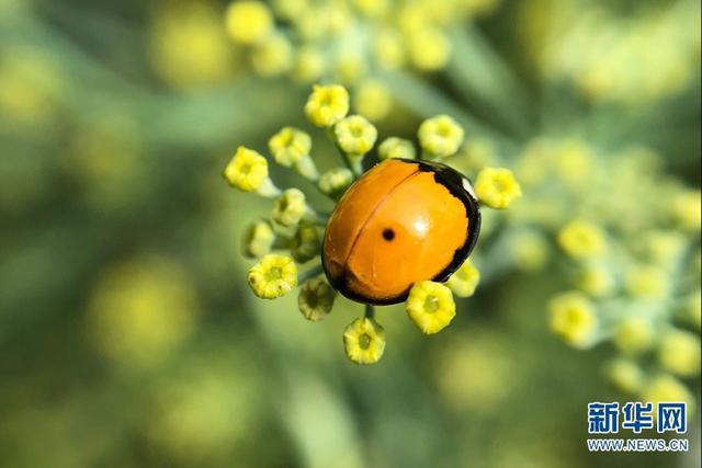 """炎炎夏日总是会听到知了、蟋蟀等昆虫的声音。有着""""动物王国""""美誉的云南,昆虫自然也很多。让我们一起看看微距下的""""昆虫王国""""究竟藏着怎样的秘密。(石光良 摄)"""