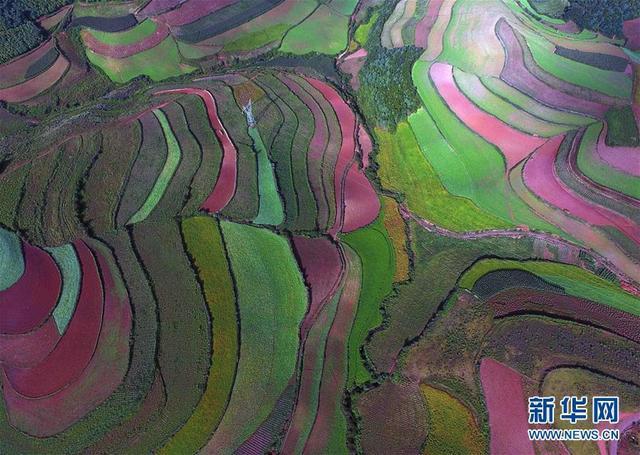 东川红土地景色(8月29日无人机拍摄)。 入秋以来,位于云南省昆明市东川区的红土地五彩斑斓,绚丽多姿。 新华社记者杨宗友摄