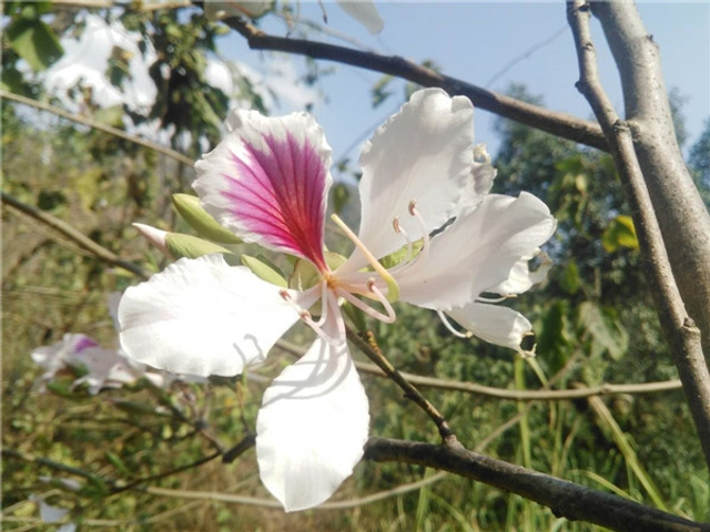 """阳春三月,春意泛滥。除了踏青赏花、游山玩水外,还可以用另外一种方式来享受春天,那就是把春天装进肚子里。目前,各种春菜开始陆续登陆龙陵城乡菜市,尤其是各种花花,不仅成为了味蕾上的""""奢华""""享受,而且成了养眼润心的""""浪漫""""之约。(来源:保山市龙陵县委宣传部)"""