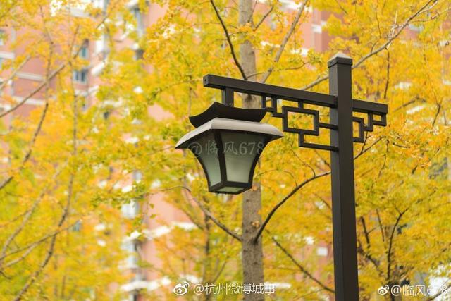 这里是杭州上塘路银杏林,这是杭州最美的季节,远眺,银杏叶子泛着暖意的金黄色,梦幻般的感觉令人沉醉。来源:@杭州发布、@临风678