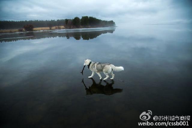 俄罗斯一冻结的湖面上刚好下过雨,于是有了这看似神奇的一幕。美腻![赞](by动漫基地)