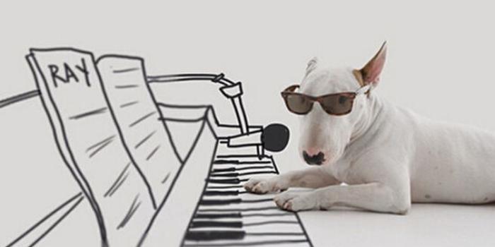 爆笑英语小笑话:会弹钢琴的狗(图)
